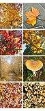 Banner - Thema: Herbst - Blätter Kaminholz Pilz - 180cmx75cm - zum Hängen & Dekorieren