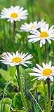 Banner - Thema: Frühling / Sommer - Gänseblümchen - 180cmx90cm - zum Hängen & Dekorieren