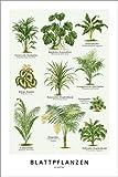 Posterlounge Acrylglasbild 40 x 60 cm: Blattpflanzen von Wunderkammer Collection/Editors Choice - Wandbild, Acryl Glasbild, Druck auf Acryl Glas Bild