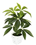 Flair Flower, grün, Schefflera im Übertopf aus Wasserhyazinthe, Kunst, Seidenblumen, Real Touch, Kunstpflanzen, Pflanzen künstlich, Dekopflanze, groß, 48x30 cm