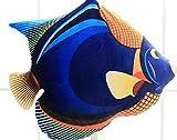 CushionsHome Se Plsch tropischen Fisch Spielzeug Kissen Puppe gefllte Tier Fisch Kissen Sofa Dekor fr Kinder Geburtstagsgeschenk 45cm Typ 5