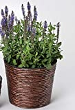 linoows Übertopf aus Wasserhyazinthe, Pflanzentopf, Blumenübertopf 26 cm