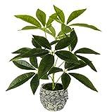 Flair Flower Schefflera im Übertopf aus Wasserhyazinthe, Kunst, Seidenblumen, Real Touch, grün, Kunstpflanzen, Pflanzen künstlich, Dekopflanze, groß, 48x30 cm