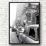 Lama auf der Leinwand eines New Yorker Taxis Wandkunst Nordische Plakate und Drucke Tierwandbilder rahmenloses Gemlde 63cmX90cm