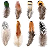 Firtink 400 Stück Federn 8 Stils Braun Federn für Kostüme, Hüte, basteln, Zuhause Dekor, DIY Dekoration