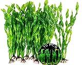 Aquarium Wasserpflanzen 10 Stk Aquarium Pflanzen Ornament Aquarium Pflanze Aquariumpflanze Fisch Tank Dekoration Künstliche Aquarium Deko Pflanzen Fisch Tank Dekoration Für Aquarien Alle Fische Sicher