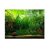 Fdit Grünes Wassergras Aquarium Aquarium Hintergrund Poster PVC Klebe Dekor Papier (61 * 41cm)
