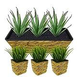 Pflanzgefäße aus Wasserhyazinthe, naturfarben, mit schwarzem Kunststoff innen, drei (3) von 10,2 x 10,2 x 11,4 cm und ein (1) von 15,2 x 45,7 x 15,2 cm.