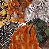 MWOOT 180Pcs 6 Arten Sortierten Federn Handwerk, Hühnerfedern Natur zum DIY Ohrring Wings Dream Catcher Crafts Aktivitäten Hochzeit Home Decoration Party