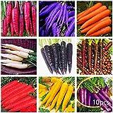 Masoke Samenhaus - Organische Karotten Samen, seltene Nahrung Röhrchen Gemüse-farbige Karotten Samen Gemüsesamen Teppiche mehrjähriger Hausgarten